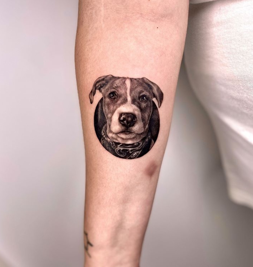 pet tattoo