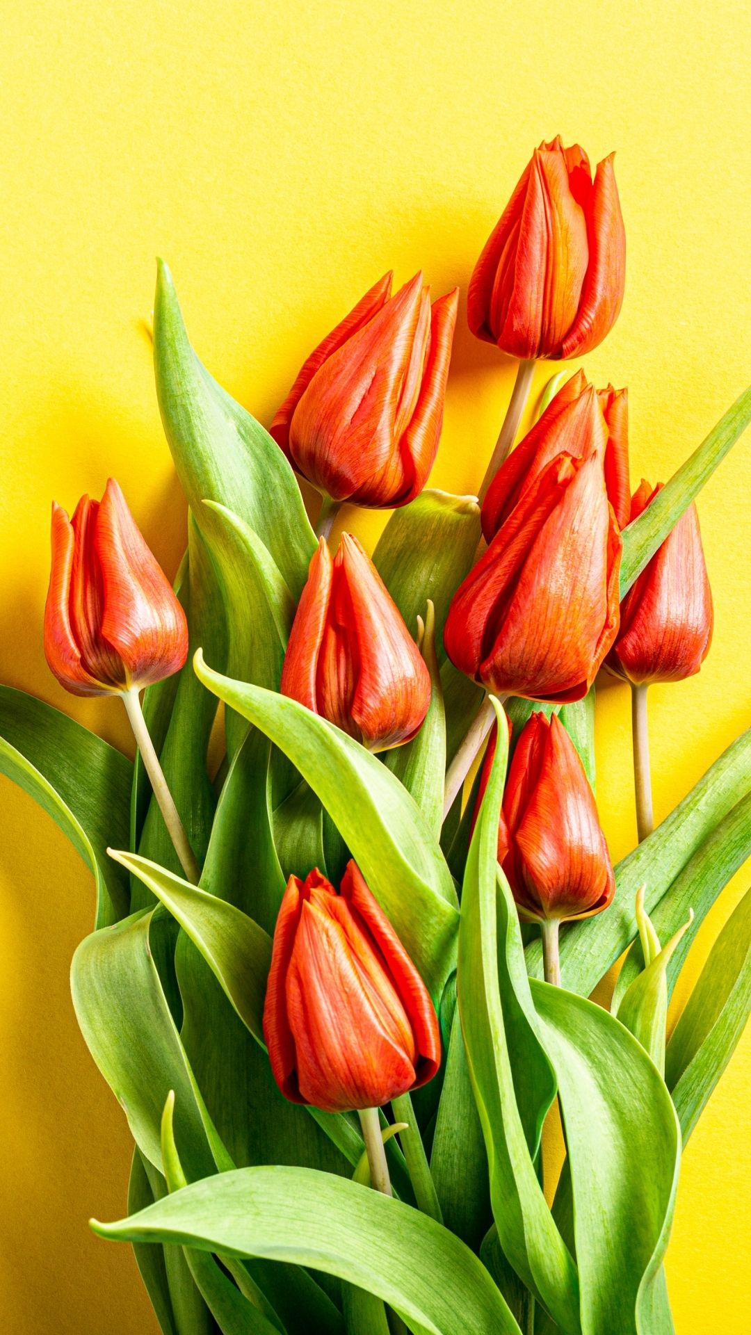 free flower wallpapers for phones