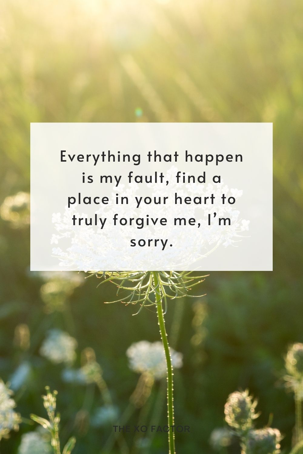 Everything that happen is my fault, find a place in your heart to truly forgive me, I'm sorry.